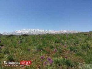 giah golestan 300x225 - گلستان، بهشت تولید گیاهان دارویی