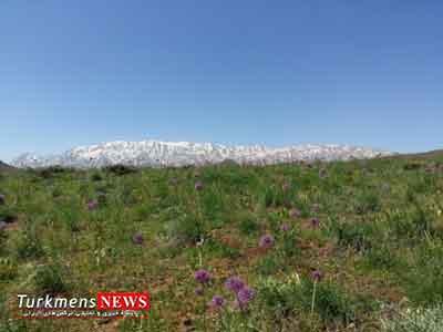 giah golestan - گلستان، بهشت تولید گیاهان دارویی