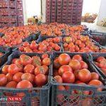 صادرات گوجه فرنگی گلخانه ای