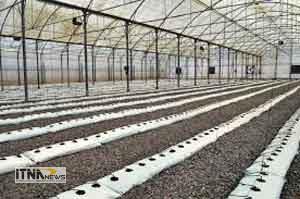 golkhane 21a 300x199 - احداث 100 هکتار گلخانه در آزادشهر گلستان