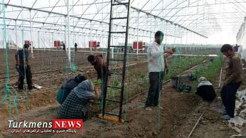 آغاز کاشت محصول در بزرگترین گلخانه مکانیزه گلستان
