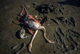 images 30 - تکرار مرگ مشکوک پرندگان مهاجر در خلیج گرگان