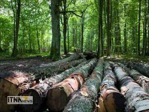 jangal 13a 300x226 - تشریح وضعیت طرح های جنگلداری در گلستان