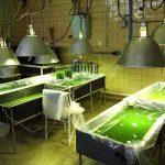 jolbak 29a 150x150 - شرکت فرانسوی Gaia با شیلات گلستان برای کشت جلبک همکاری می کند