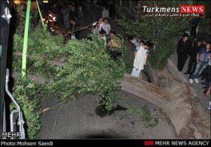 کودک ۲ ساله ترکمن در جنگل قرق بر اثر سقوط درخت فوت کرد