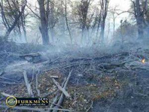 maharj 16az 300x225 - آتش سوزی در هشت نقطه جنگلی شرق گلستان مهار شد