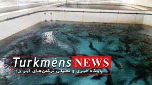 پرورش ماهی خاویاری,گنبدکاووس