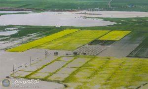 n83305766 73012624 300x180 - سیل 13 هزار هکتار مزارع کلزا در گلستان را غیرقابل برداشت کرد
