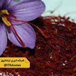 تولید 1100 کیلوگرم زعفران در گلستان