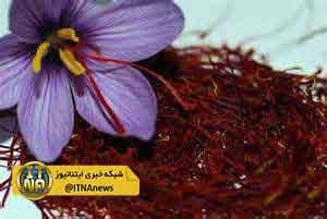 o4Qs5zzDiD4L 300x201 - تولید 1100 کیلوگرم زعفران در گلستان