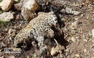 park 15m 300x187 - حیوان کشی در جوار معروفترین پارک ملی کشور/پناهگاه یا قتلگاه؟