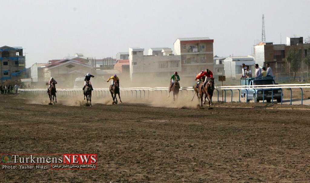هفته هفتم کورس سوارکاری تابستانه در بندر ترکمن امروز برگزارمی شود