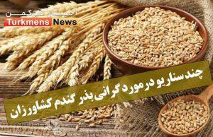 pih0lelg 300x194 - چند سناریو درمورد گرانی بذر گندم کشاورزان