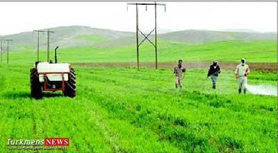 sampashiturkmensnews 19f - کشاورزان گنبدی مزارع غلات را علیه قارچ ها سمپاشی کنند