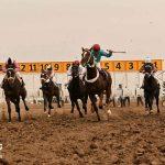 هفته هشتم مسابقات اسبدوانی کورس پاییزه آق قلا برگزار شد+عکس