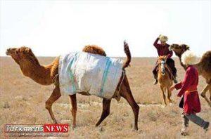 استان گلستان,شترداری,رونق اقتصادی